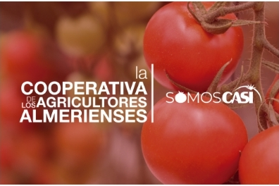 Taller Agencia - Proyectos - Cooperativa Agricultores Almerienses